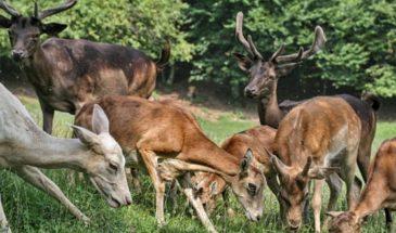 Deer Reef Restaurant, Slovenia photo by Croatian Attractions