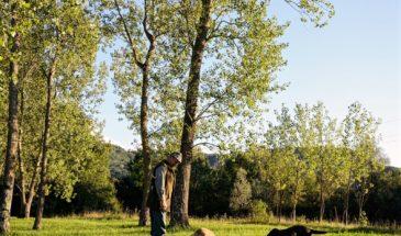 Truffle hunting Zigante, Livade Istria, Croatia photo credit by Zigante Truffles