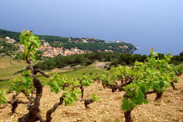 Hvar, Vineyards