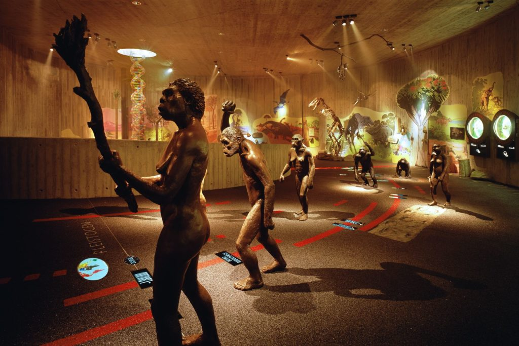 Krapina Neanderthal Museum, photo by Damir Fabijanic